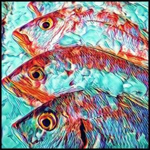 Pretty wild effect on once wild fishPhotograph: bigplanetlittlemoon/GuardianWitness