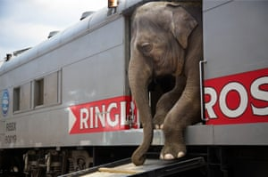 There are more than 300 people that with the Ringling Bros. and Barnum & Bailey circus blue unit, representing 25 different countries and speaking everything from Russian to Arabic to Guarani. A few travel in cars and trailers, but a majority, 270, live on the trains. Most come from multigeneration circus families, to the extent that collectively, the circus staff represents thousands of years of circus history