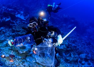 Data gathered during these dives will allow researchers to determine if twilight zone ecosystems can serve as a refugium for animals that live in the heavily impacted shallow reefs