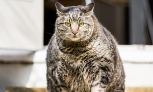 'Fat? Me? It's just my fur coat.'
