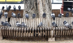 Pigeons sitting on a bench