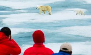 Tourists photograph a polar bear and its cub