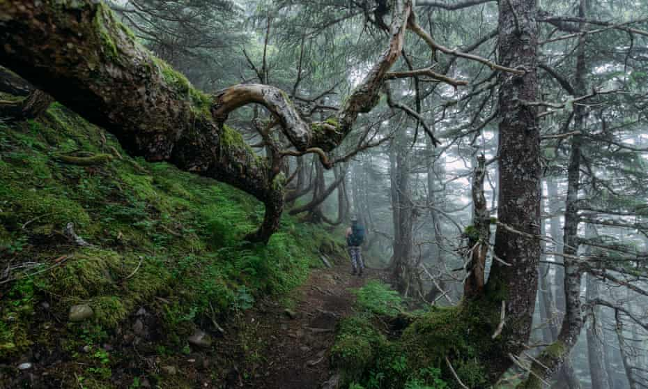 A trail through the Tongass national forest, where Trump proposed allowing logging.