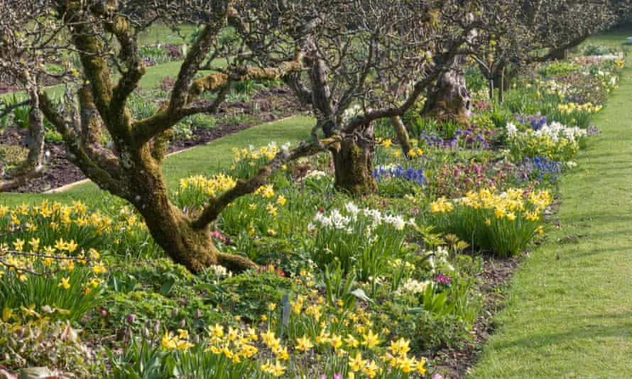 Spring borders with old apple trees at Hergest Croft Gardens, Kington, Herefordshire, UK.