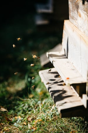 Bees enter a hive