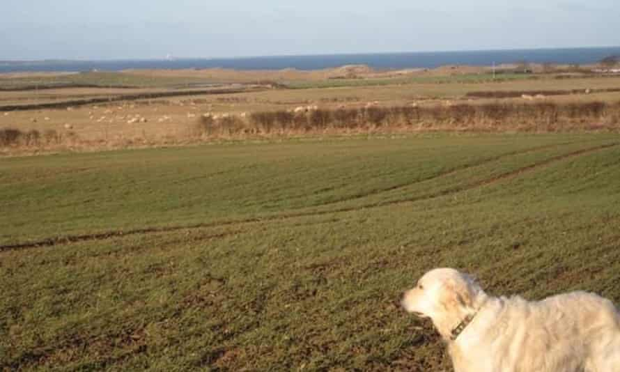 Countryside around Druridge Bay in Northumberland, the site of the planned open cast mine