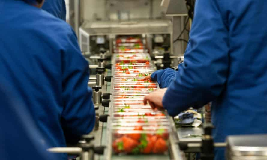 Strawberry farm packaging production in the UK