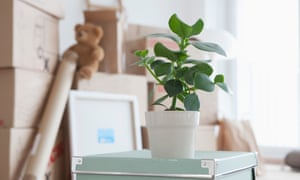 Piled cardboard boxes in flat, potted plant in foreground
