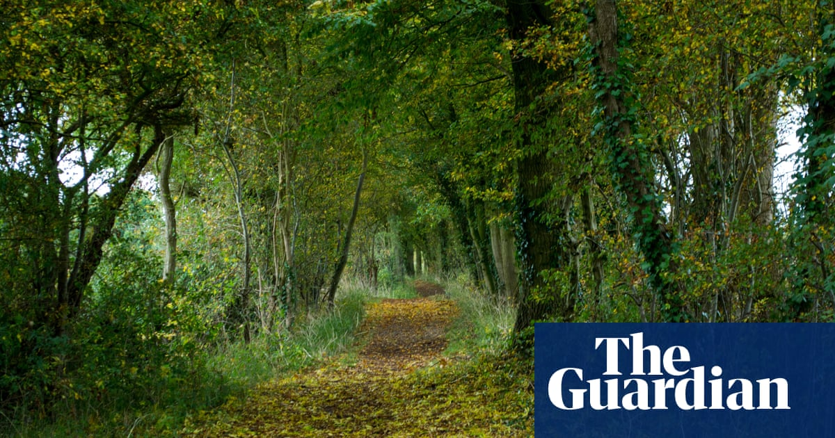 Image of article 'Restore UK woodland by letting trees plant themselves, says report'