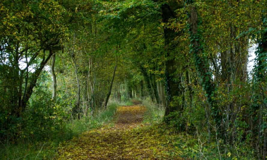 A footpath through woodland in Suffolk.