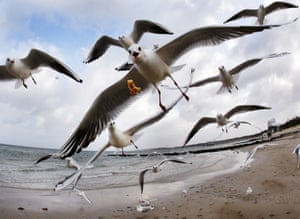Timmendorfer Strand, GermanySeagulls soar above the shoreline at Timmendorfer beach on Germany's Baltic coast