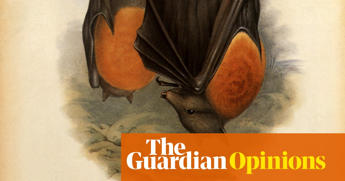 A bat: In the city, they fly along routes that mirror roads