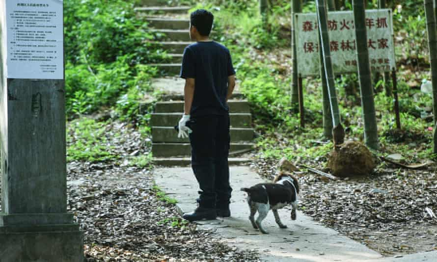 A rescuer with his dog, part of the search party looking for the escaped leopard in Hangzhou