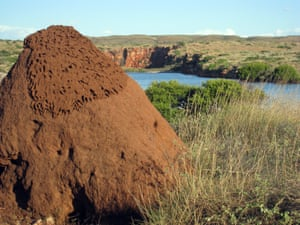 A termite mound at Cape Range national park in Western Australia.