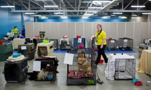 Volunteers look after pets belonging to the evacuated residents of Fort McMurray at the Bold centre in Lac la Biche.
