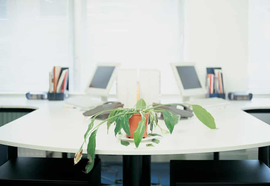 Dying Potted Plant in an office