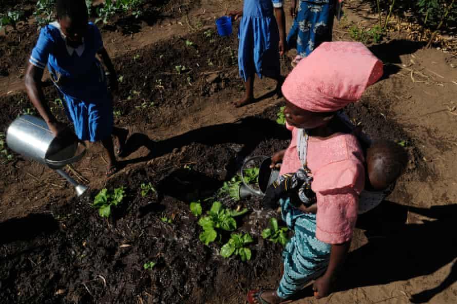 Farm workers tending crops in Malawi.