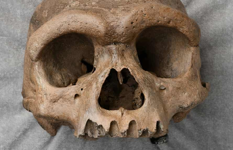 Fossilised skull found in Chinese well