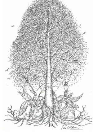 Drawing of a tree.