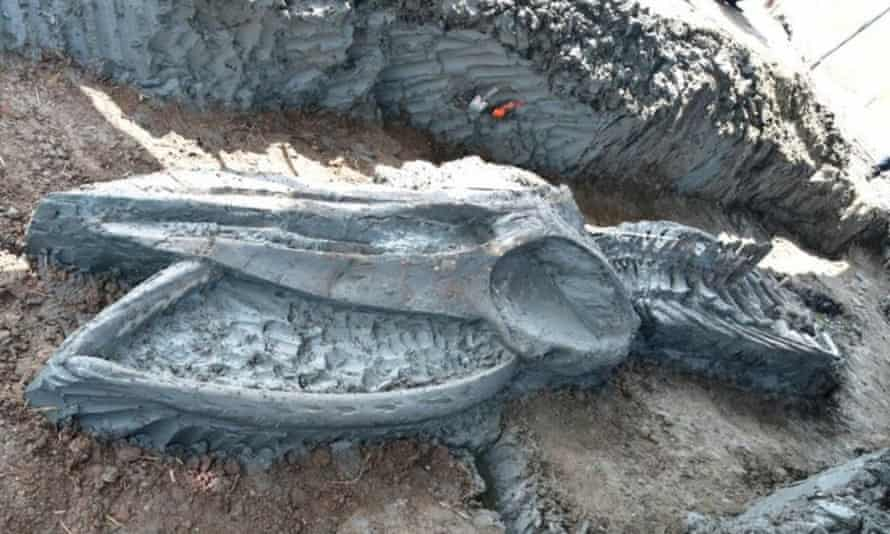 The rare whale skeleton discovered in Thailand