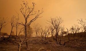 burnt out woodland near lodoga california