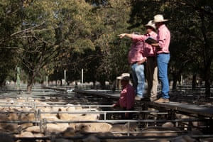 Sale day at Deniliquin saleyards in  NSW