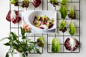 A rack, to which are pinned several single leaves of baby gem lettuce and chicory leaves, with a photograph intended as the centrepiece of this leafy ensemble: it shows a white plastic salad bowl containing the very leaves that now surround it. It is as if they have been set free from the prison of the bowl only to be pinned degradingly to the wall for the public to throw scorn at. A solitary evergreen house plant looks on in pity.