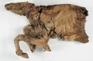Mummified remains of an ancient caribou.