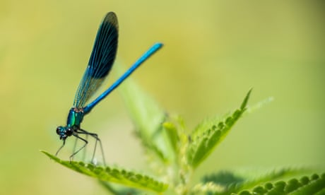 Why are insects in decline, and can we do anything about it?