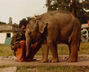 A man and elephant calf