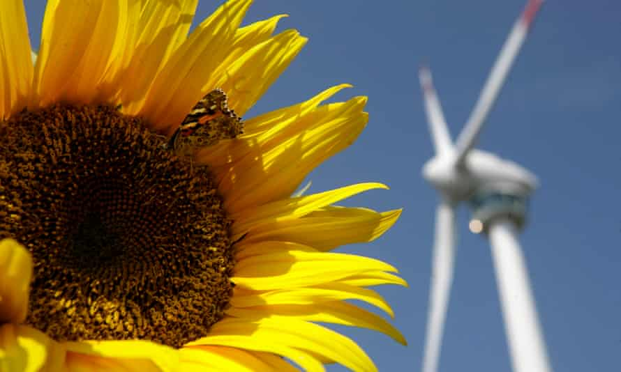 A butterfly sits on a sunflower in front of a wind generator in Bruck and der Leitha, near Vienna, Austria.