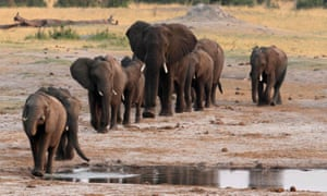 A herd of elephants in Hwange National Park