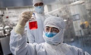A technician inspects monkey kidney cells