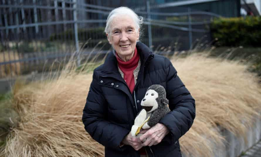 British primatologist Jane Goodall, the world's famous authority on chimpanzees, poses for a photograph on 18 January 2018, in Paris.