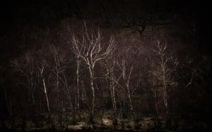 Birchlight by Carol Cotterill, Edinburgh