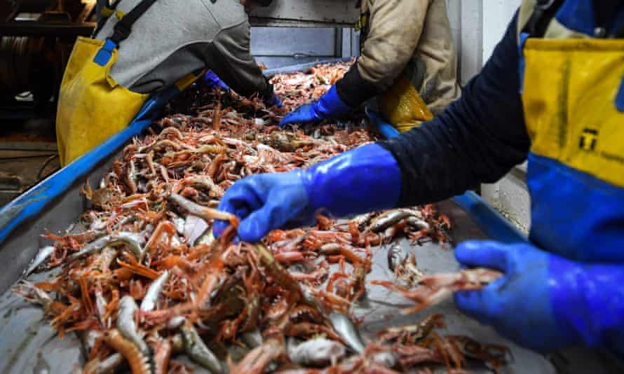 Workers process the day's catch on a trawler in Eyemouth harbour in the Scottish Borders last month.