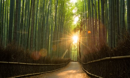 There is anger over people carving their names into the trees in one of Kyoto's popular bamboo forests.
