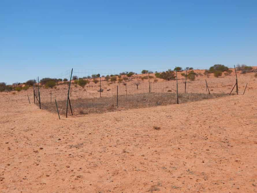 A square fence surrounds a plot of grass in the middle of a desert