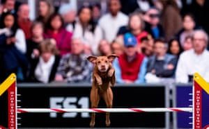 The action heats up in the agility competition