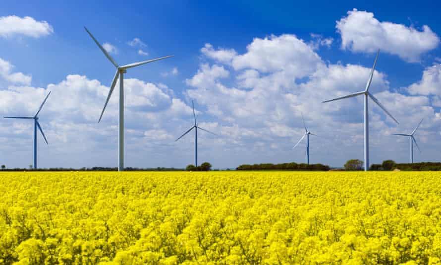 Wind turbines in a field of yellow rape seed plants in bloom