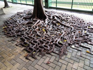A tree's roots spill across the pavement