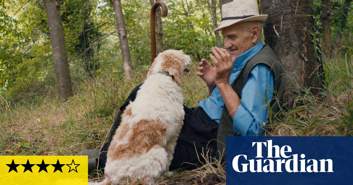 The Truffle Hunters review – delicious documentary of men and their dogs