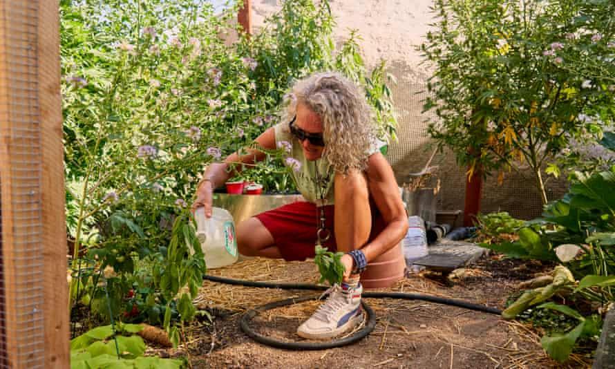 Stephanie waters tomato plants