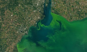 Satellite images capture the algae bloom in Lake Erie in 2017. The algal bloom is caused in part by phosphorus runoff from farms and poses a health risk.