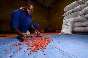 Farm labourers prepare seeds for packing at Equator Seeds, distributors of the Nabe 15 bean