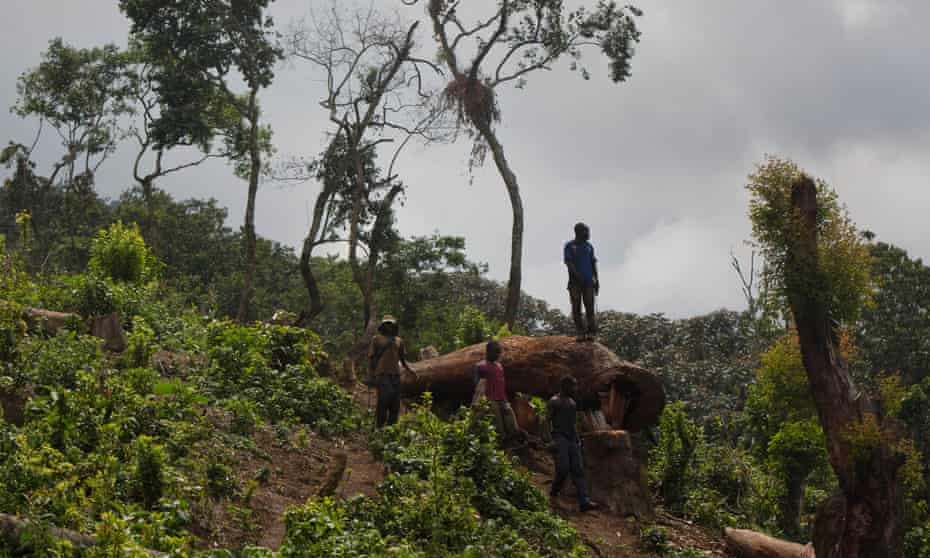 A man looks out over a newly cleared area of forest at Kahuzi-Biéga national park near Bukavu, Democratic Republic of the Congo.