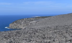 Bushfires have laid waste to the formerly lush greenery of Kangaroo Island