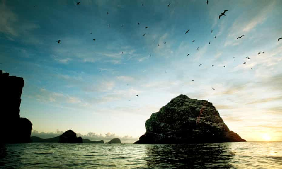 St Kilda has seen its seabird population plummet, with experts certain the change is down to global warming.