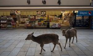Two deer walk past a souvenir shop near Todaiji temple in Nara, Japan.