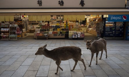 Two deer walk past a souvenir shop near Todaiji temple in Nara, Japan.